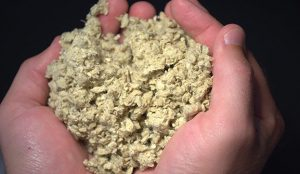 Hands holding agricultural fiber that can be made into food service containers