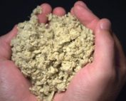 Pulp fibers in held in hands