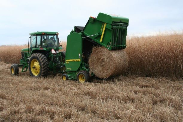 A baler releasing a bale of switchgrass